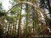 tree_arch_ad